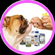 Vétérinaire – Pharma